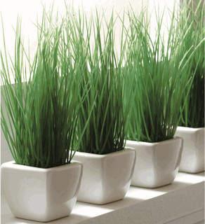 standar indoor plant