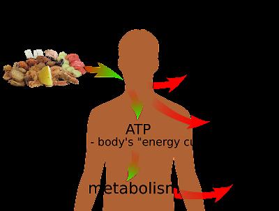 Permalink ke Pengertian, Proses, Dan Jenis – Jenis Metabolisme