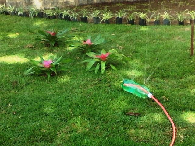 plantas para jardim vertical de garrafa pet:Regador de jardim/horta de garrafa pet