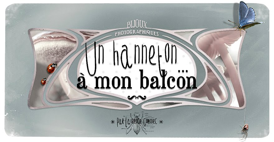 Un hanneton  mon balcon