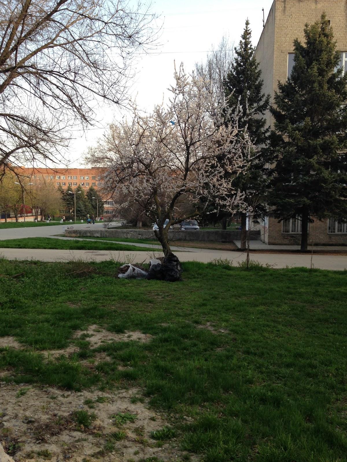 Весна-Ростов-2014