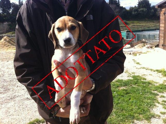 Adotta Un Cane A Siracusa Adottati Cuccioli Figli Di Mamma Beagle