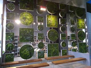plantas naturalizadas