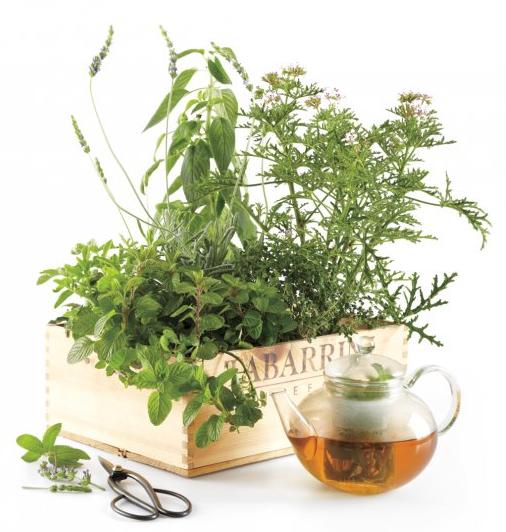 A Homemade Herbal Tea Garden!