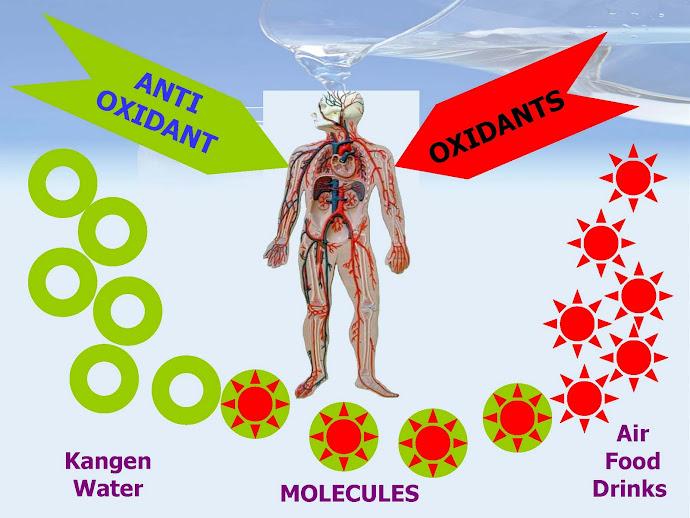 Антиоксидантные свойства Канген воды