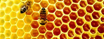 Tips Mengobati Gejala Sengatan Lebah (bukan tawon) secara Alami
