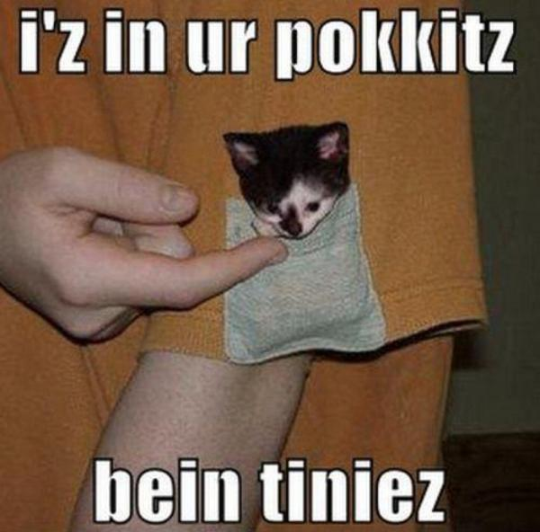 Cute Kittens in Pockets