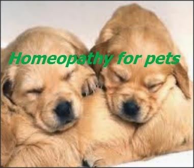 Homeopathy pets