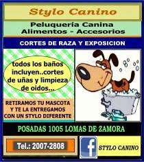 Stylo Canino