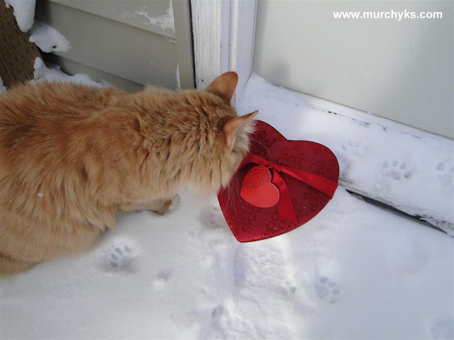 Happy Valentine's Day everyone from our Murchyk Cat