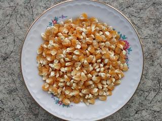 Семенные кукурузные зерна