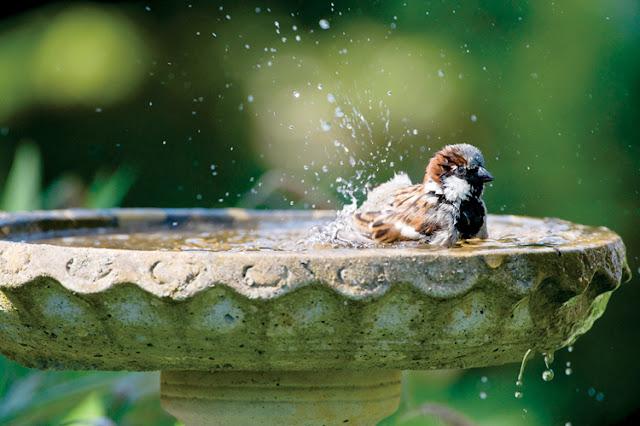 woda dla ptaków poidło