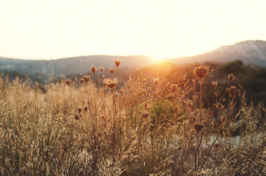 Blommor i solnedgång