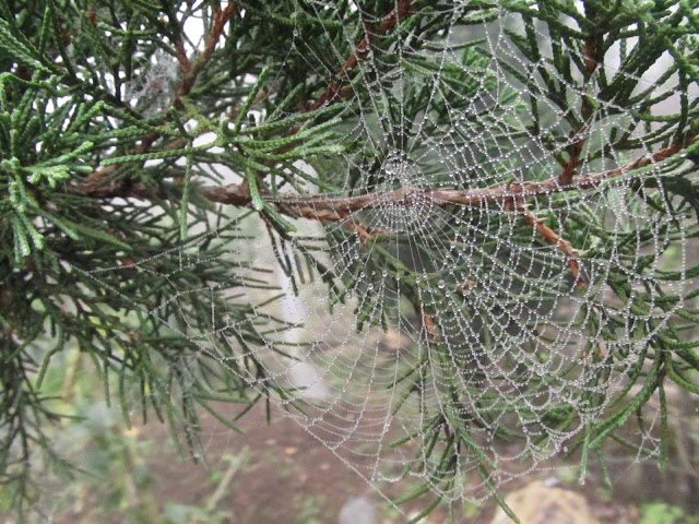 Vietnam countryside spider web hiking