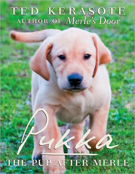 cover of the book entitled Pukka, with a cute yellow lab puppy walking toward the camera