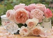 Vendemos Rosas