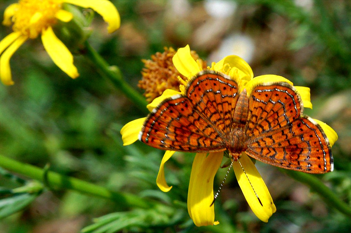 12 rare sighted and appealing butterfly species know ur ledge