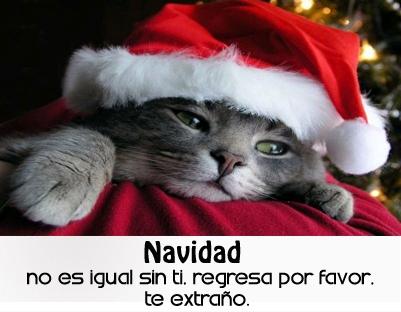 Fotos Con Frases Lindas Navidad Sin Ti