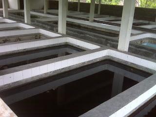 kolam budidaya koi