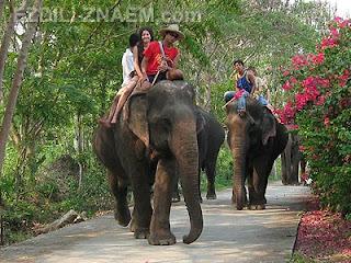 катание на слонах в Тайланде. Сколько стоит прокатиться на слоне