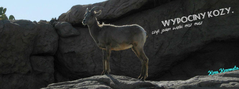 Wypociny Kozy, czyli Jeden Wielki MiszMasz