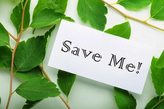 Selamatkan hutan dengan gerakan hemat kertas di kantor