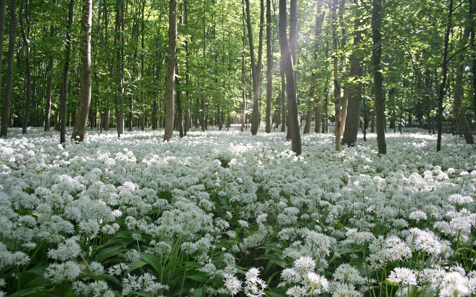 Foto van de lente in het bos met witte bloemen op de grond