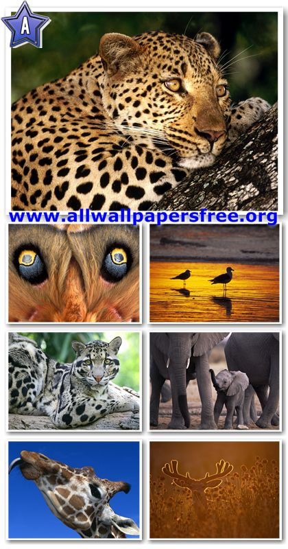 60 Amazing Animals Wallpapers 1280 X 1024 [Set 31]