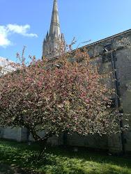 Salisbury, a katedrális tavasszal