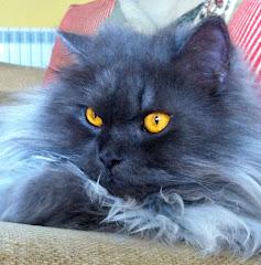 Mi gato Clover
