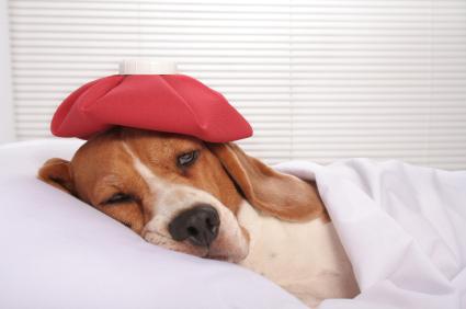 Dog Insurance Basics