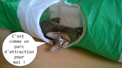 Chaton gris joue dans un tunnel.