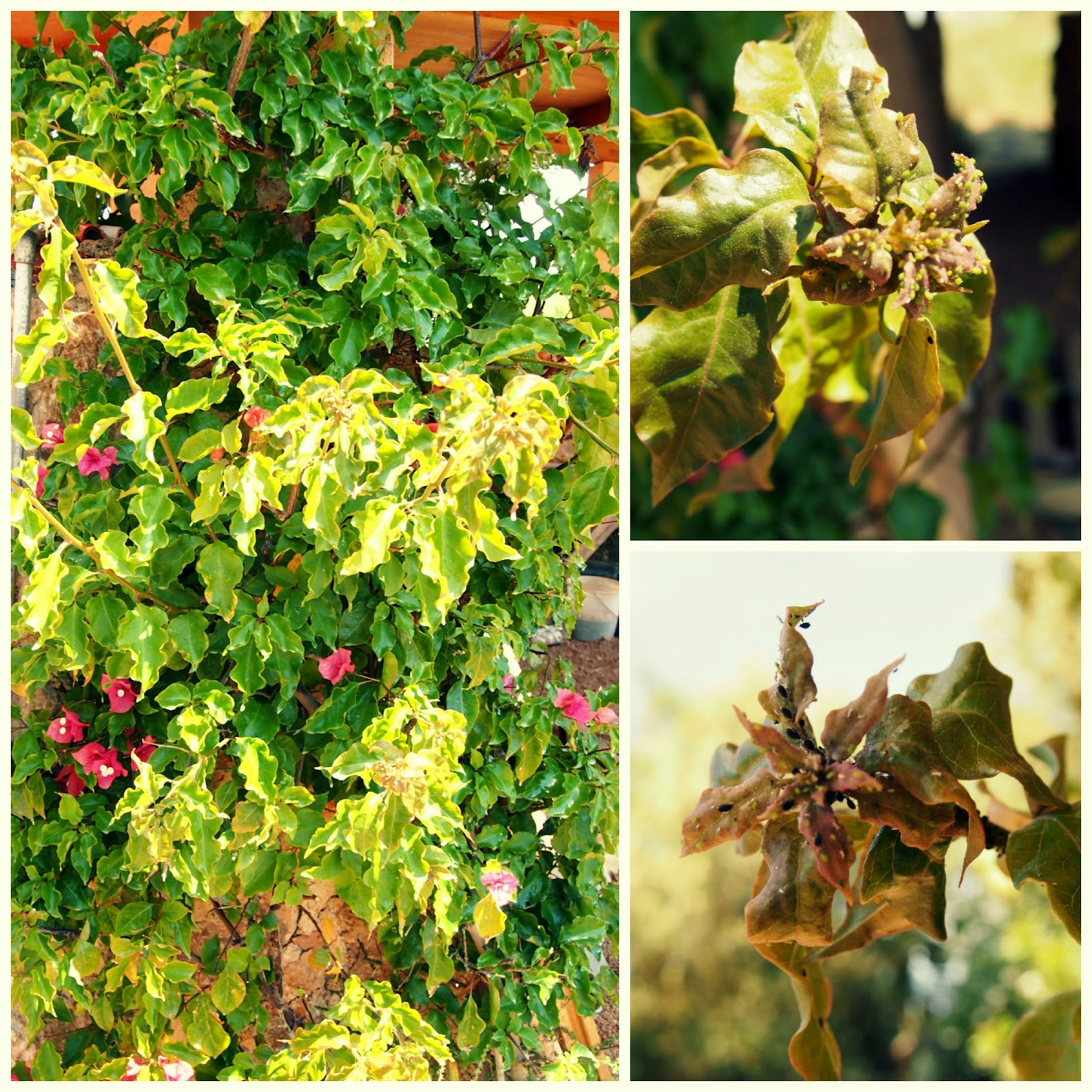 Mallorca handmade hoy empezamos nueva secci n jardiner a for Viveros frutales wikipedia