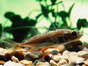 Suara Bising Ancam Kelangsungan Hidup Ikan