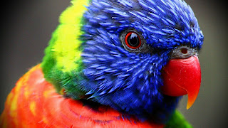 Colorful Parrot free background images