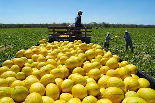 Projetos de irrigação no Ceará ajudam a obter renda durante a estiagem