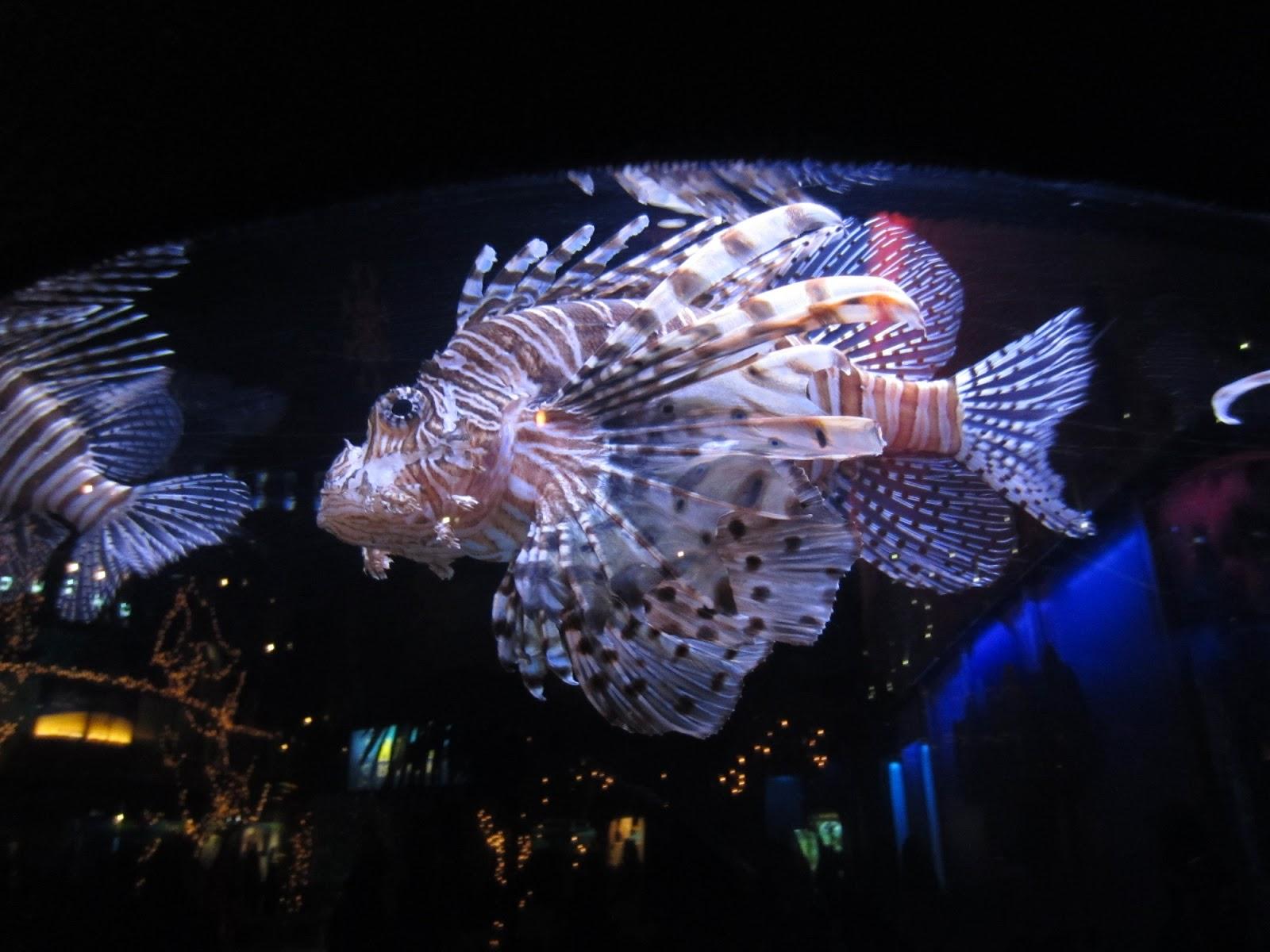 Evan and lauren 39 s cool blog 12 28 12 mystic aquarium for Go fish mystic