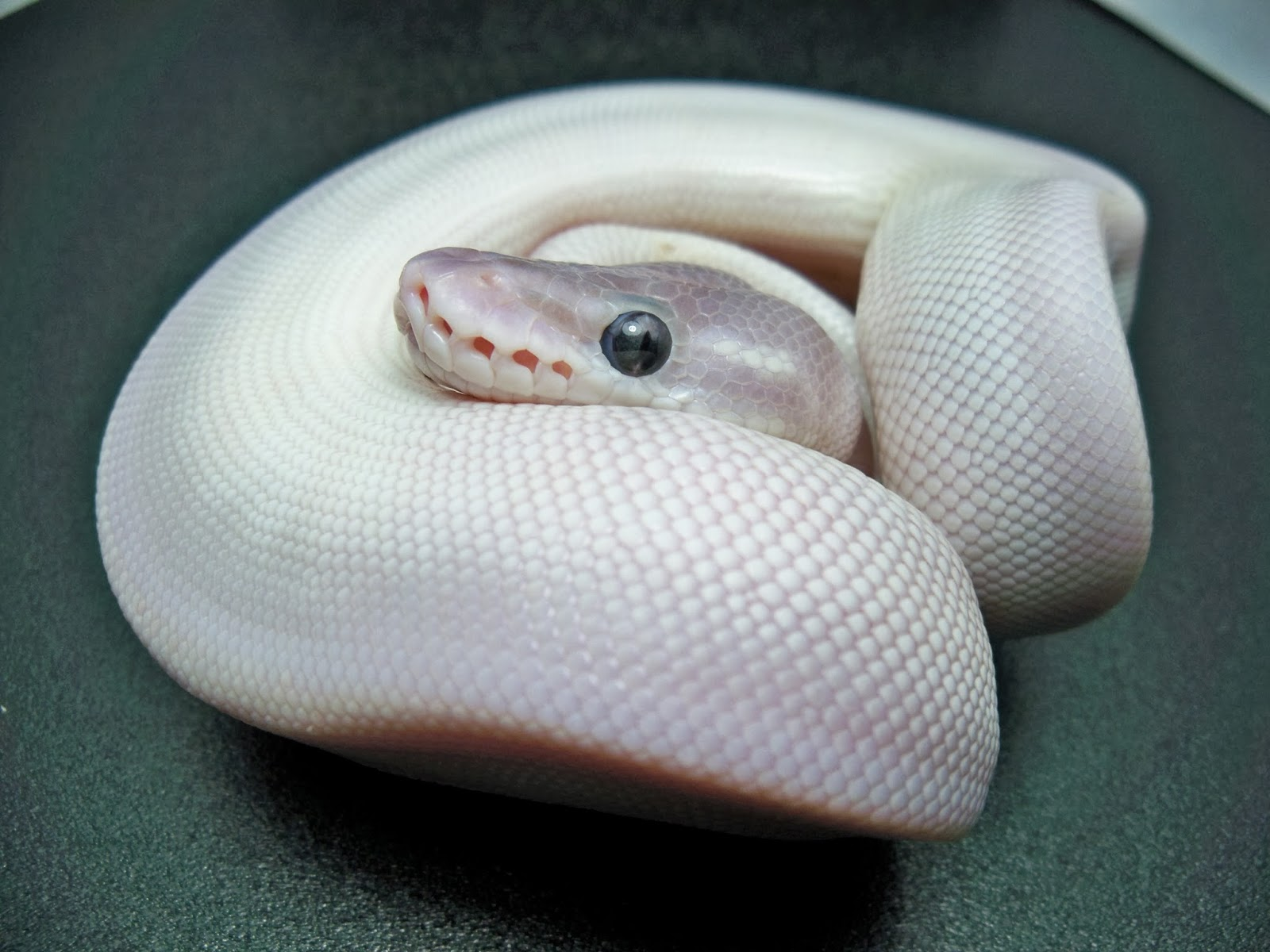 20 Excellent <b>HD Snake Wallpapers</b> - HDWallSource.com