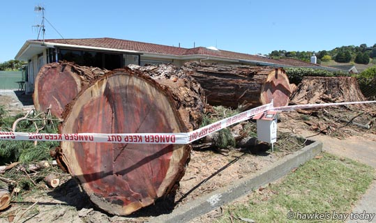 Tree felling specialists felled a giant redwood tree in Taradale, believed to be more than 140 years old and still growing, on a property on the corner of Ngarimu Drive and Church Rd. photograph