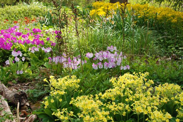 A beautiful display of plants in her productions beds... just a tapestry of color. Primulas fill out the front in yellow and pinks.