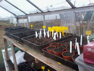 newly sown seeds.
