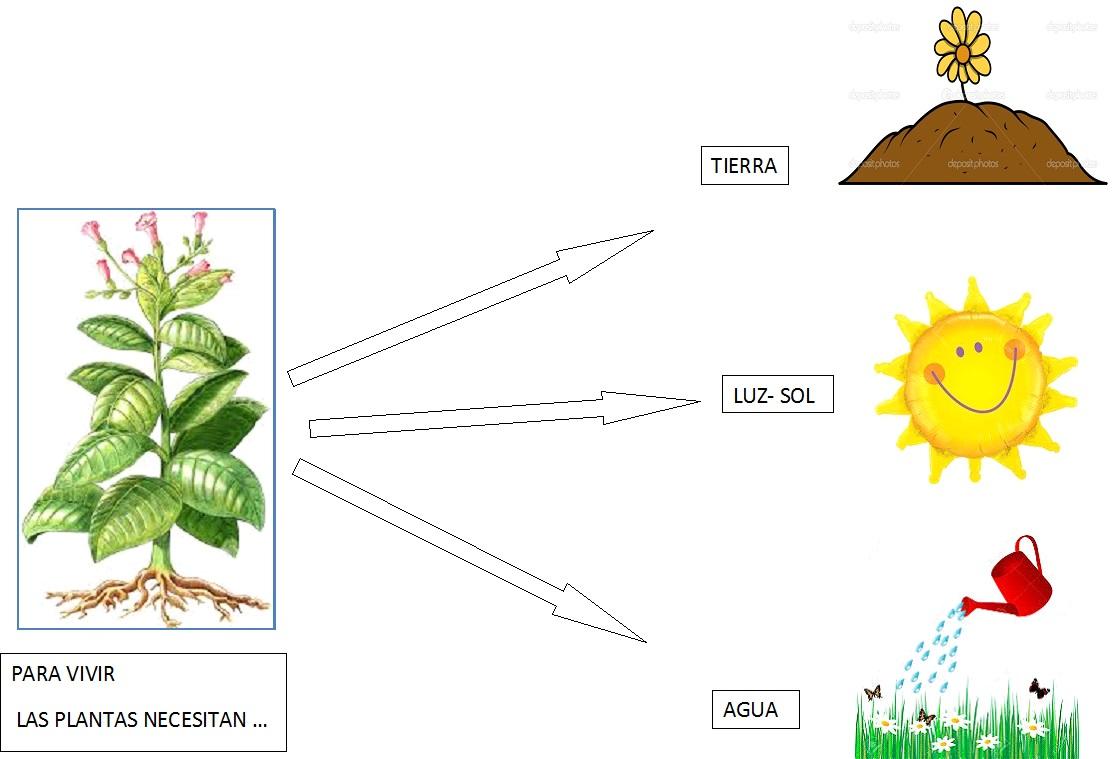 Espacio duendes proyecto las plantas nuestro jard n - Cosas sobre las plantas ...