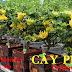 Cách trồng cây phật thủ