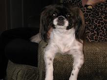 My Fur Baby Baxter