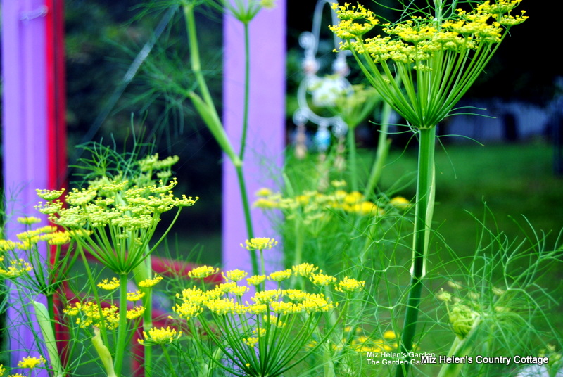 Abundant Spring Harvest