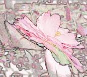 Backyard Camellia