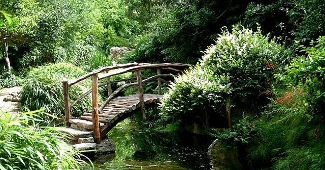 fiori da giardino giardino fiorito : Il giardino Zen ~ Il mio giardino fiorito