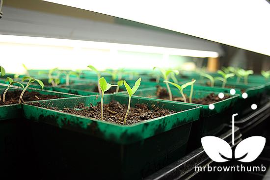 Indoor seed starting lights
