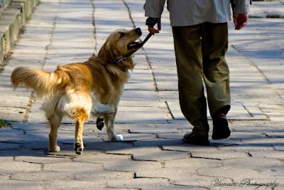 Zdjęcie przedstawiające psa na spacerze z Panem, z poziomu psa, perspektywą psa, kompozycja