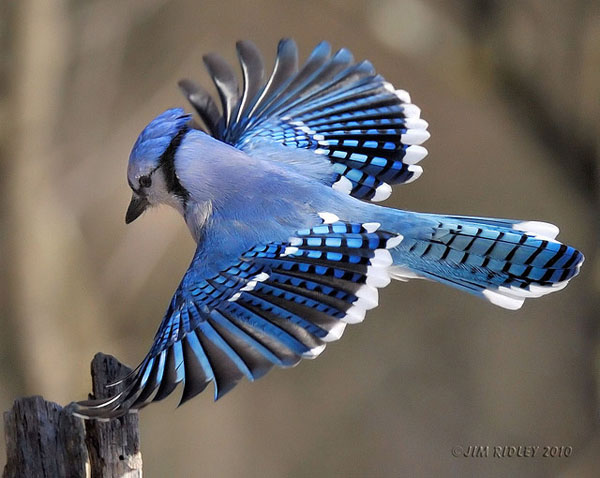 Wallpaperspiolt Beautiful Birds Wallpapers